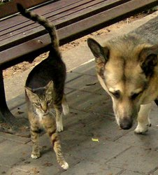Dog and Street Cat - Best of Friends  © Copyright 2008 Morgan Thomas All rights reserved